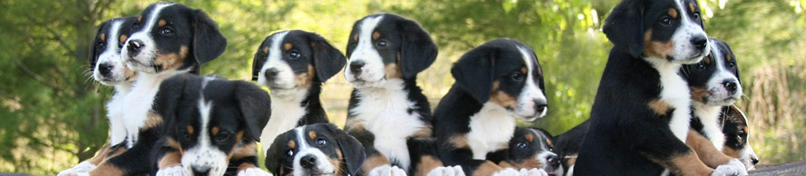 Entlebucher Mountain